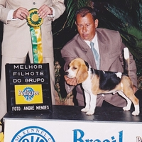 Colt Brasil Kennel Club